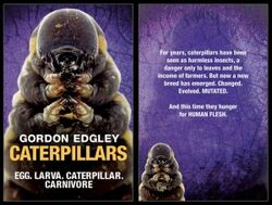 Caterpillars-300x227