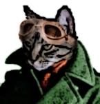 File:Springcat.jpg