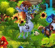 Whitewish b