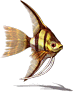 Fish-Gold Angelfish