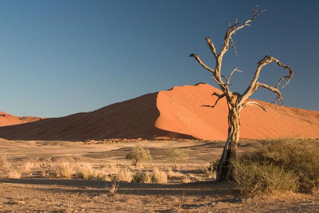 File:Thorn Tree Sossusvlei Namib Desert Namibia Luca Galuzzi 2004a.JPG