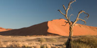 Sabaku Desert