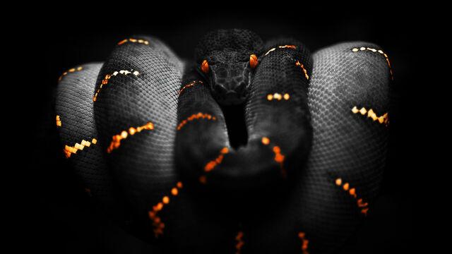 File:Animals-snakes 00249581.jpg