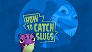 How To Catch Slugs!