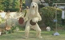 Dancing-dog-japanese-commercial