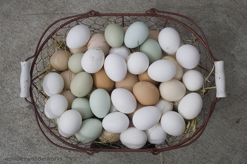File:Eggs of many colors.jpg