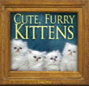 Cute Furry Kittens Single