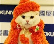 Fashionable-cats5