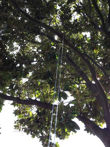File:Cords hanging for untwisting 1 resized.jpg