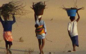 File:Natuur.koepel vzw SenegalBelgium.jpg
