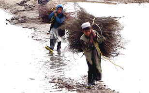 Afghan children carrying brush