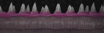 The Teeth