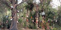 Isla De Las Munecas: My Encounter