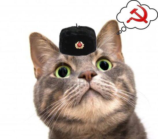 File:Russian Cat.jpeg
