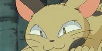 Ferocious Cat