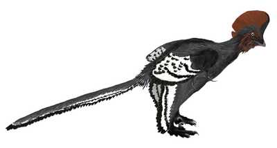 Anchiornis martyniuk-1-