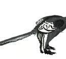 Alex The Anchiornis