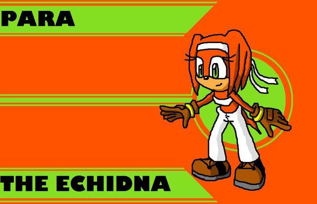 File:Para the Echidna.jpg