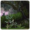 File:Battle Mode - Deep Woods.png