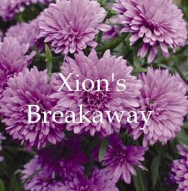File:Xion's breakaway logo.png