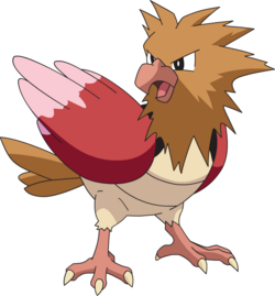Spearow AG anime