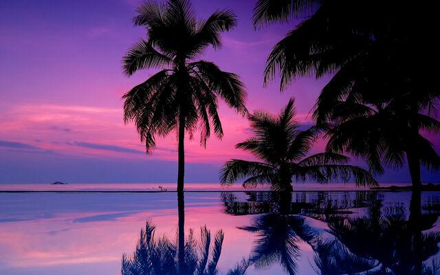 File:7021833-tropical-purple-sunset.jpg
