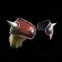 VikingShoulders