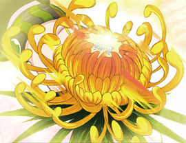 Singular Velvet Sky Chrysanthemum