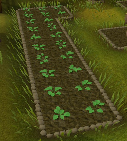 File:Strawberries grow.png