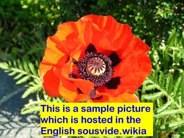 File:Sample picture English.jpg