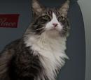 Thaddeus P. Cat