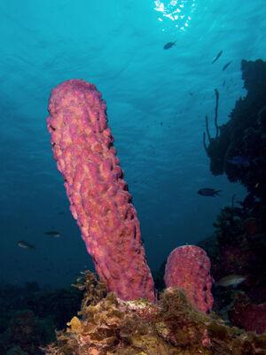 Stovepipe sponge