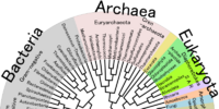 Taxonomy (Triassic Divergence)
