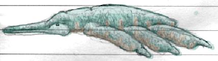 File:Ternumocorpidae Colored HQ.png