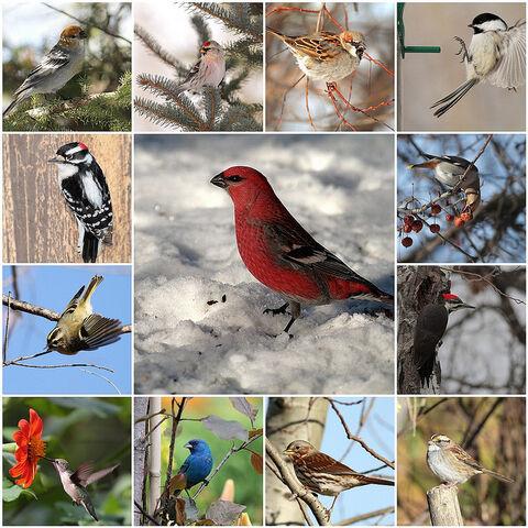 File:BIRD WORLD.jpg