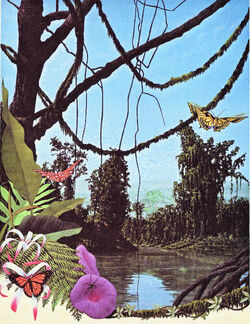 Tropicalforests