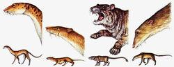 Predatorrats