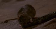 Rat Dragging Sil's Tentacle