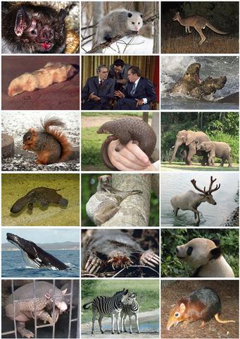 File:413px-Mammal Diversity 2011.png