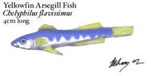 Gillfish