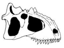 Black beast skull