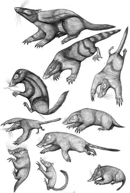 Deltatheridian moles, badgers, desmans