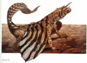 Dracomicros