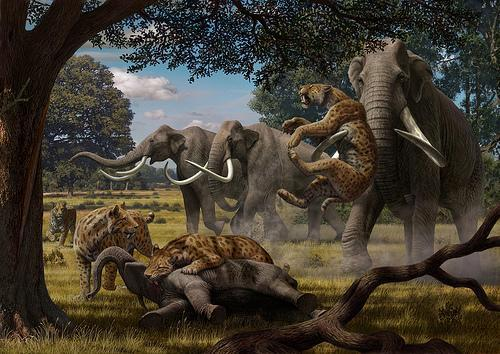 File:Sabre toothed lion with scrophants.jpg