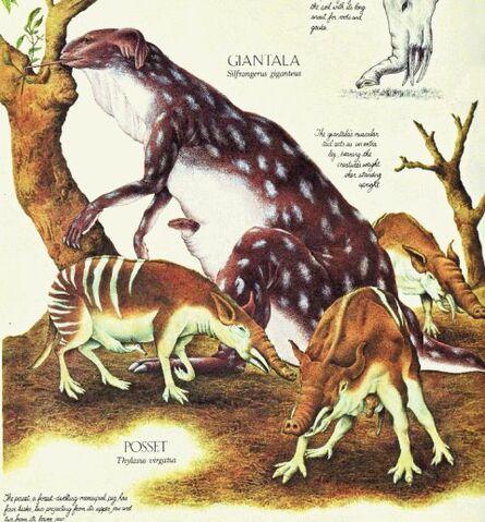 File:Silfrangerus giganteus y thysalus virgatus.jpg