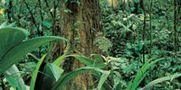 Antarctic Tropical Rainforest