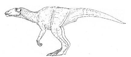 Levantino (Levipodoides sinkkoneni)