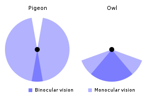 File:Field-of-view.png
