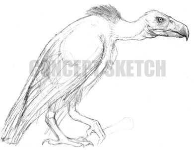 Vulturocskt