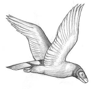 Pentagon chickenhawk